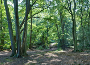 Top-10-Epping-Forest